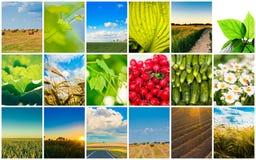 De concepten van de oogst. De collage van het graangewas Stock Foto's