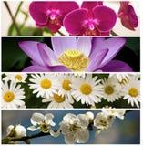 De conceptuele collage van de vier seizoenen Stock Afbeelding
