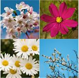 De conceptuele collage van de vier seizoenen Royalty-vrije Stock Afbeelding