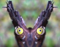 De conceptuele foto - gezicht van het bos - ziet van takken met poppen` s ogen onder ogen Stock Afbeelding