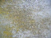 De concrete achtergrond van het mos Royalty-vrije Stock Afbeeldingen