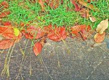 De concrete vloer met de bloemen van het gazongras heeft rode droge bladeren in de herfst stock foto