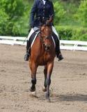De concurrentie van de paarddressuur Stock Foto