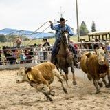 De concurrentie van de rodeo Stock Fotografie