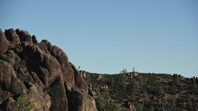 De Condor van Californië stijgt in Blauwe Hemel stock footage