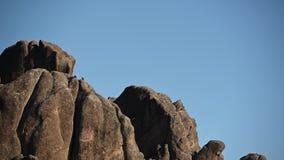 De Condors van Californië stijgen lui rond Toppen stock videobeelden