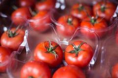 De cosecha propia fresco, frutas y verduras sanas orgánicas de la granja en el franco Fotografía de archivo libre de regalías