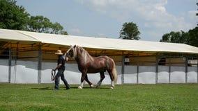 De cowboy toont zwaar paard stock videobeelden