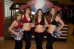 De Coyotes Cheerleaders van Phoenix Stock Foto