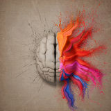 De Creatieve Hersenen Stock Fotografie