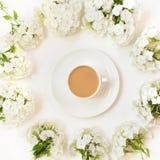 De creatieve vlakte legt, ochtendkoffie met melk en witte bloemflox rond op wit Hoogste mening Royalty-vrije Stock Afbeelding