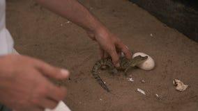 De cueillette crocodile de bébé, doigt dans la bouche banque de vidéos