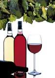 De cultuur van de wijn Stock Fotografie