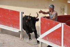 De Cursus Camarguaise van La Stock Afbeeldingen