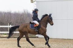 De cursus van de paardhindernis en parkour Royalty-vrije Stock Foto's