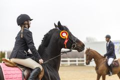 De cursus van de paardhindernis en parkour Stock Afbeeldingen