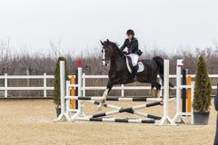 De cursus van de paardhindernis en parkour Stock Afbeelding