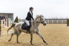 De cursus van de paardhindernis en parkour Royalty-vrije Stock Afbeeldingen
