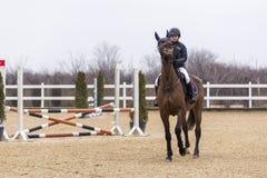 De cursus van de paardhindernis en parkour Royalty-vrije Stock Foto