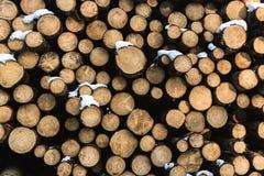 De Cuttedboomstammen zijn stucked op andere stock foto's