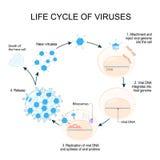 De Cyclus van de virusreplicatie stock illustratie