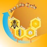 De cyclus van het achtergrond bijenleven vector vector illustratie