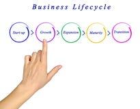 De cyclus van het bedrijfsleven stock foto's