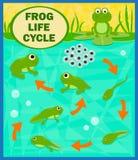 De cyclus van het kikkerleven royalty-vrije illustratie