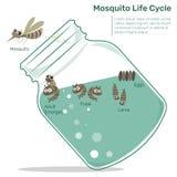 De Cyclus van het mugleven in Glasfles royalty-vrije illustratie