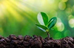 De Dag die van het wereldmilieu zaailingenjonge plant in het ochtendlicht planten op aardachtergrond royalty-vrije stock foto's