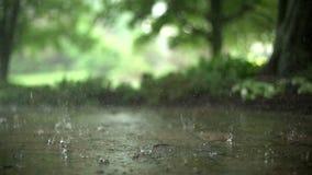 De dag van de de zomerregen stock videobeelden
