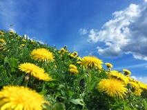De dag van de lente Stock Afbeelding
