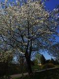 De dag van de lente Stock Foto's
