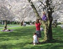 De Dag van de lente in Kenwood Maryland stock foto