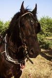 De dag van de paardzomer royalty-vrije stock fotografie