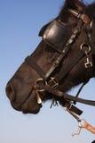 De dag van de paardzomer stock foto's