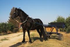 De dag van de paardzomer royalty-vrije stock afbeeldingen