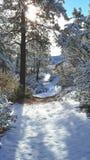 De dag van de pretsneeuw in de wintersprookjesland Stock Afbeeldingen