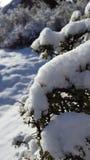 De dag van de pretsneeuw in de wintersprookjesland Stock Foto