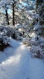 De dag van de pretsneeuw in de wintersprookjesland Stock Afbeelding