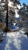 De dag van de pretsneeuw in de wintersprookjesland Royalty-vrije Stock Foto's