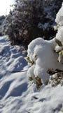 De dag van de pretsneeuw in de wintersprookjesland Stock Foto's