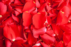 De Dag van de rode Valentijnskaart van rozenbloemblaadjes Royalty-vrije Stock Fotografie