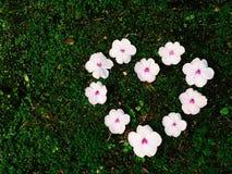 De dag van de valentijnskaart Het hart van de bloem Royalty-vrije Stock Afbeeldingen