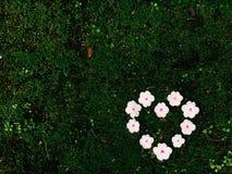 De dag van de valentijnskaart Het hart van de bloem wit Stock Foto's