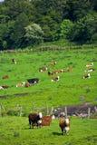 De dag van de zomer bij het platteland Royalty-vrije Stock Afbeeldingen