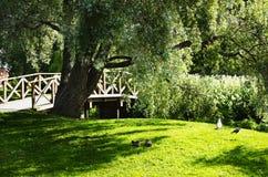 De dag van de zomer in het park royalty-vrije stock afbeelding