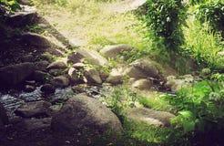 De dag van de zomer in het park stock foto's