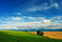 De dag van de zomer op weiden en gebieden Stock Foto