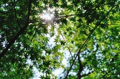 De dag van de zomer (schaduw) Royalty-vrije Stock Foto